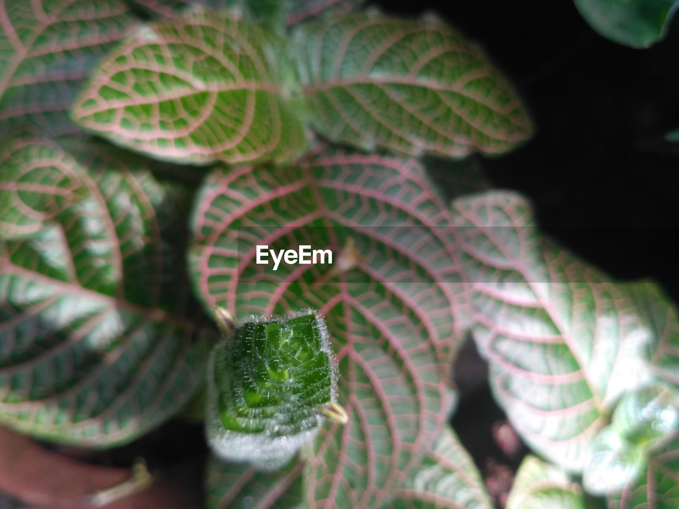 CLOSE-UP OF FERN OUTDOORS