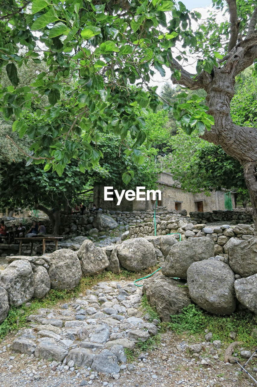 plant, tree, solid, nature, rock, architecture, day, no people, built structure, rock - object, formal garden, stone - object, growth, tranquility, outdoors, green color, garden, stone material, stone wall, ornamental garden