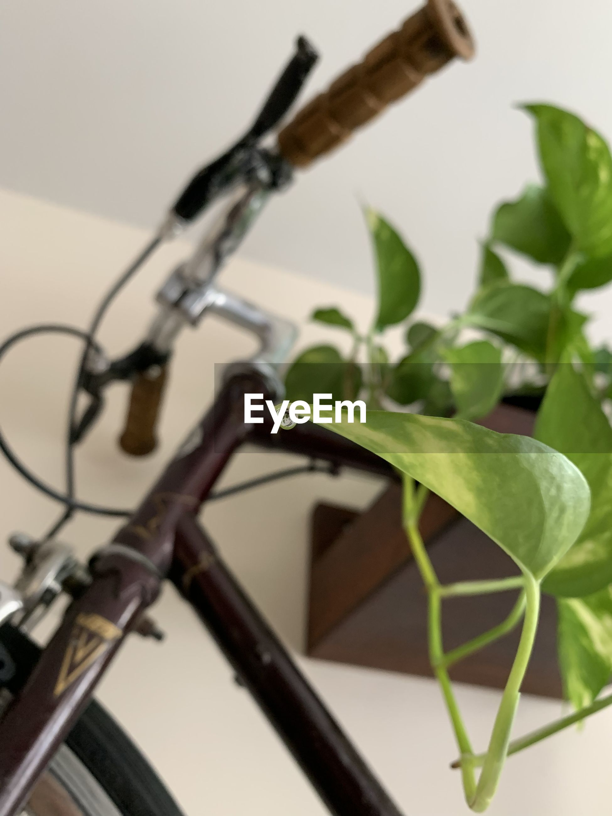 CLOSE-UP OF BICYCLE PLANT BY METAL WALL