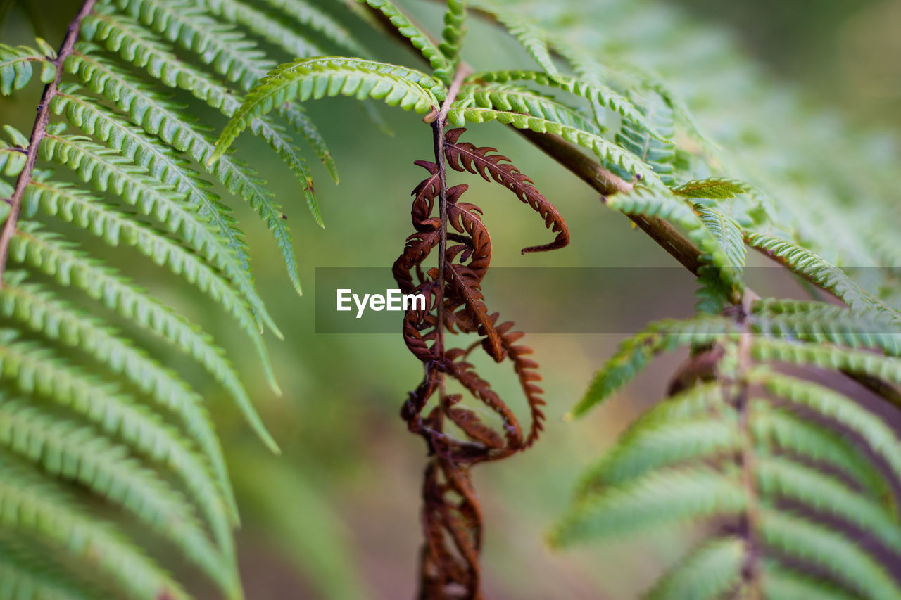 CLOSE-UP OF FERN ON PLANT