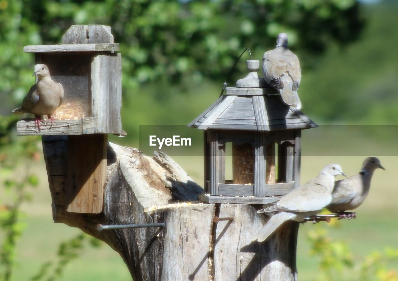 animal themes, bird, focus on foreground, day, outdoors, animals in the wild, no people, animal wildlife, bird feeder, perching, nature, close-up, mammal