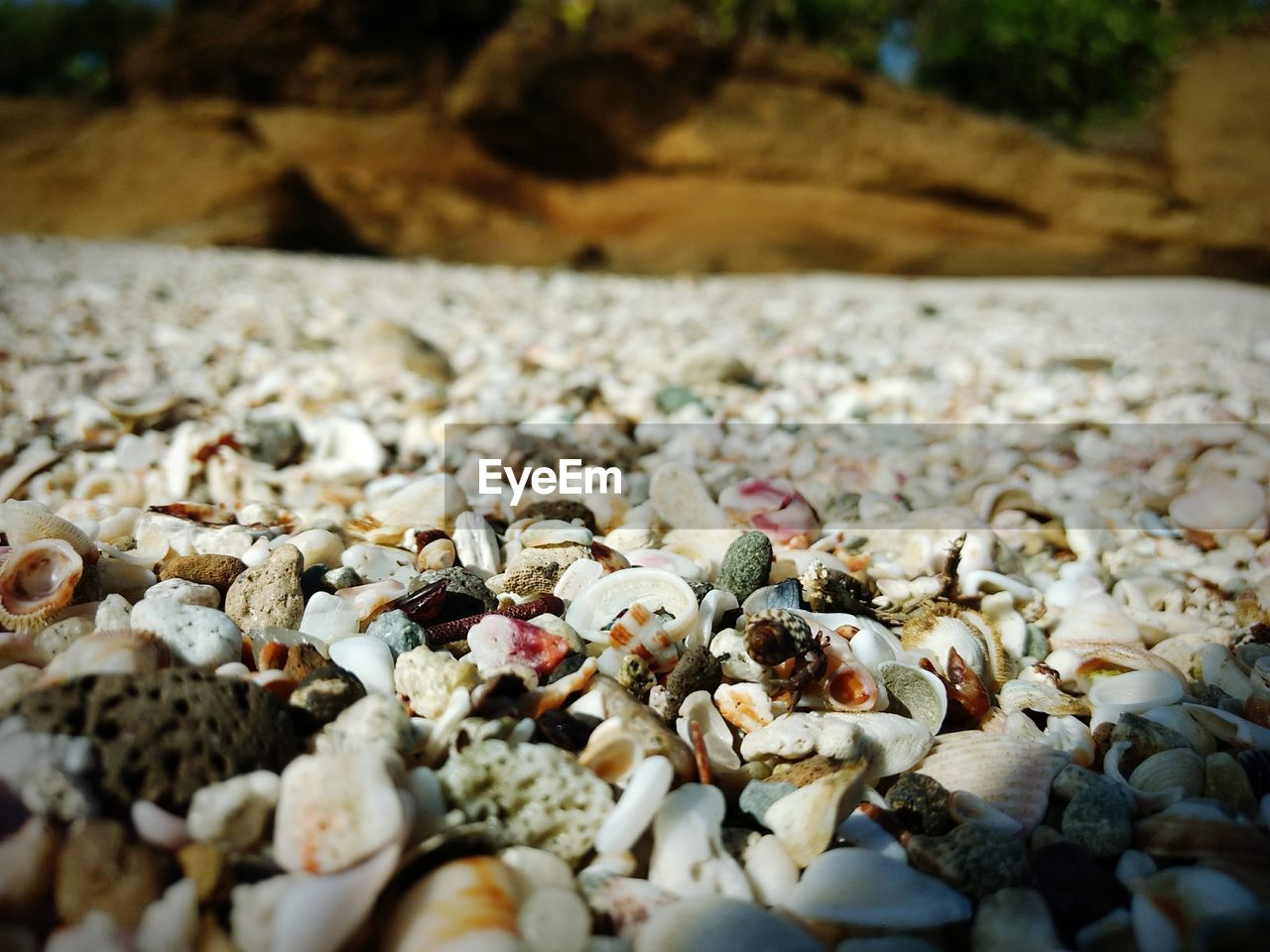 SURFACE LEVEL OF SHELLS ON BEACH