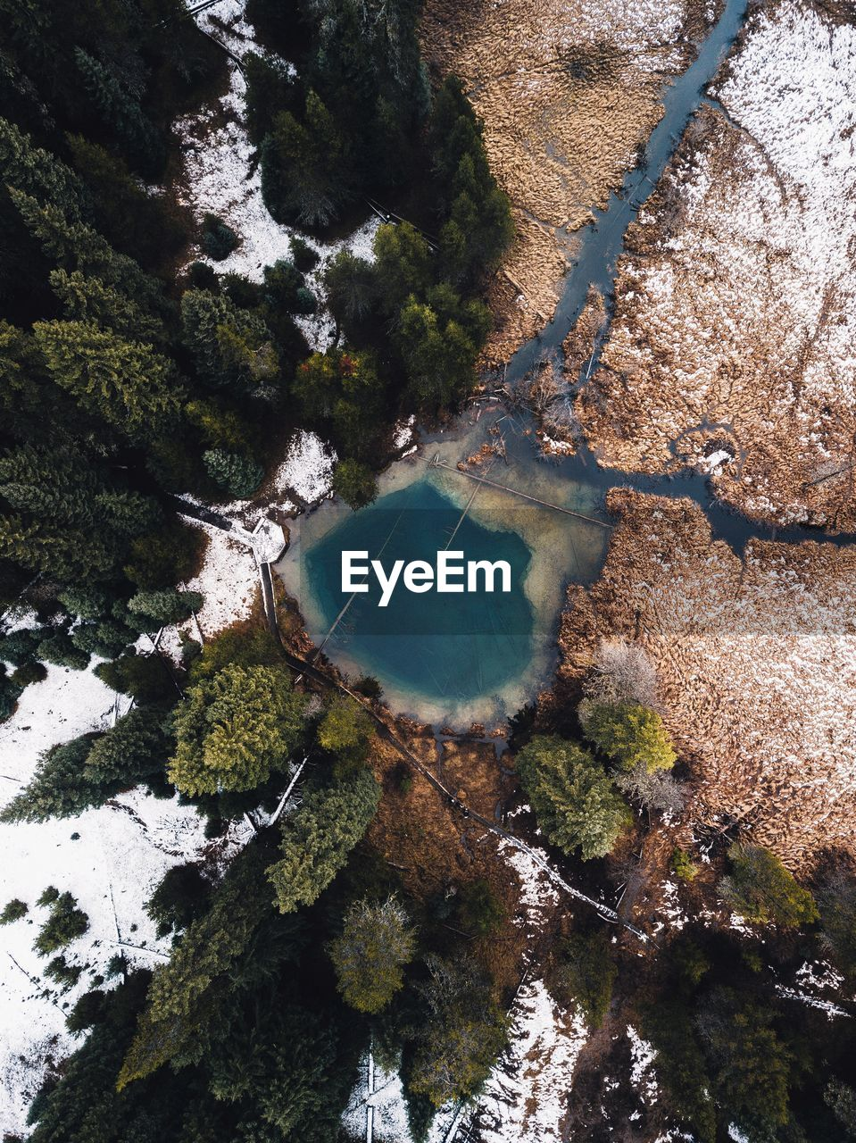 High angle view of trees by alpine lake