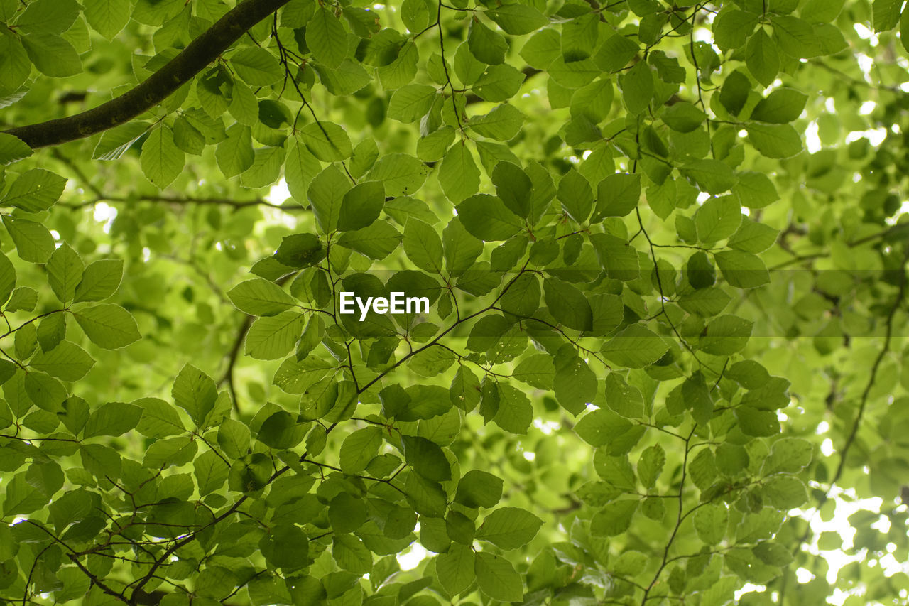 leaf, green color, growth, plant, nature, sunlight, day, no people, close-up, outdoors, freshness, beauty in nature, tree