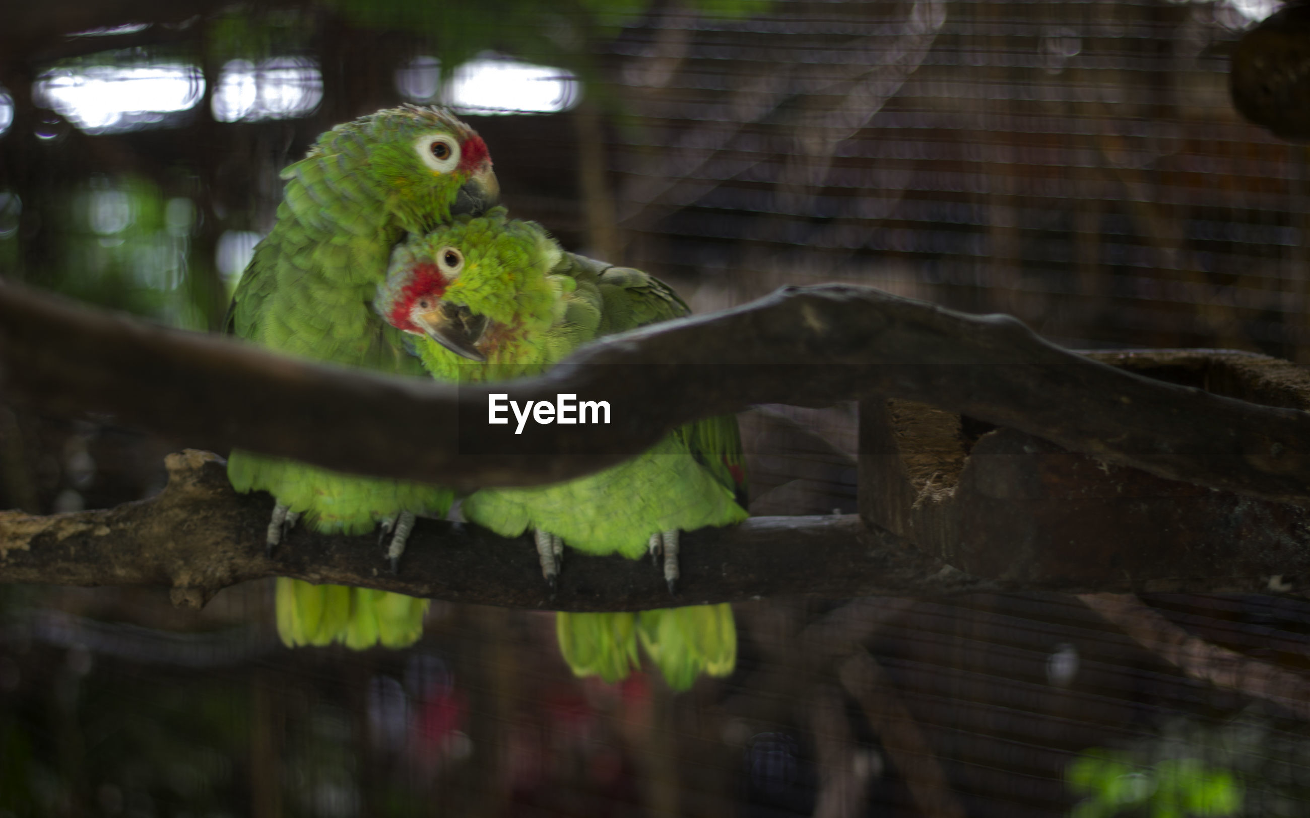 Close-up of parrots on branch