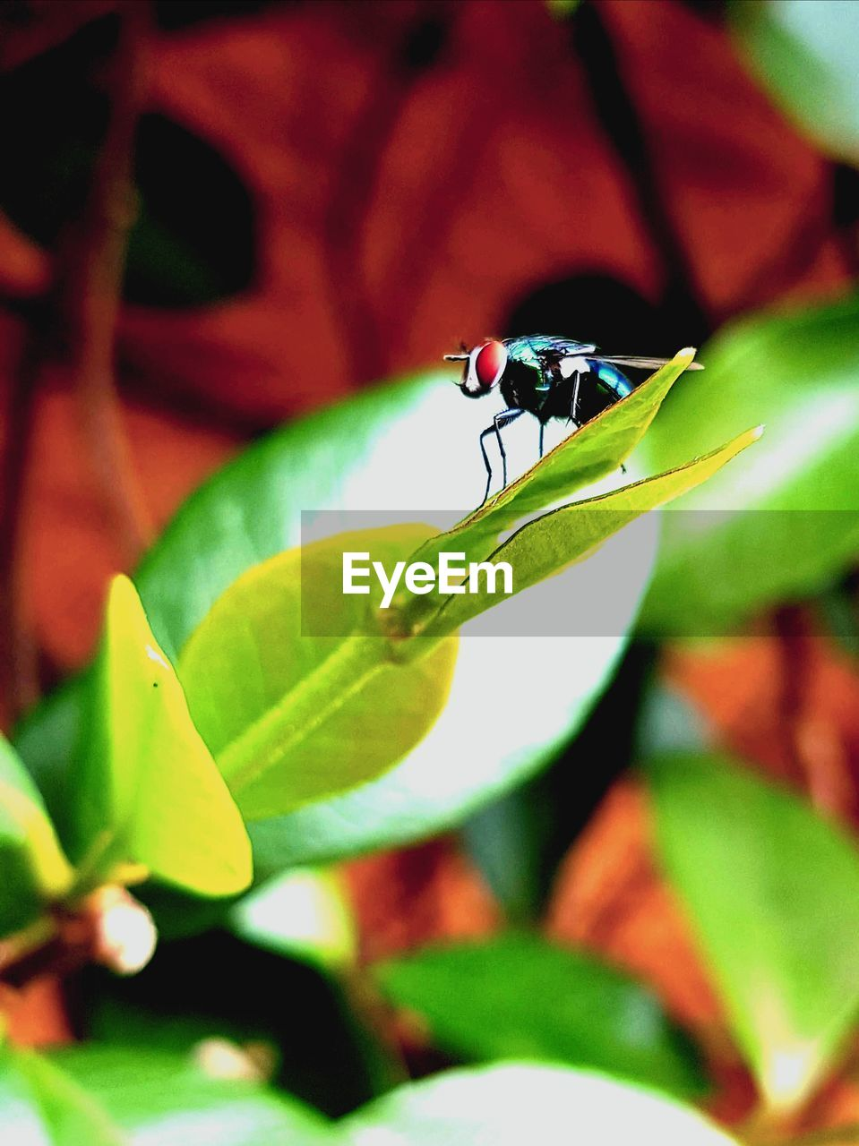insect, invertebrate, leaf, plant part, animals in the wild, animal themes, animal wildlife, animal, one animal, close-up, plant, green color, growth, selective focus, no people, nature, day, animal wing, focus on foreground, beauty in nature