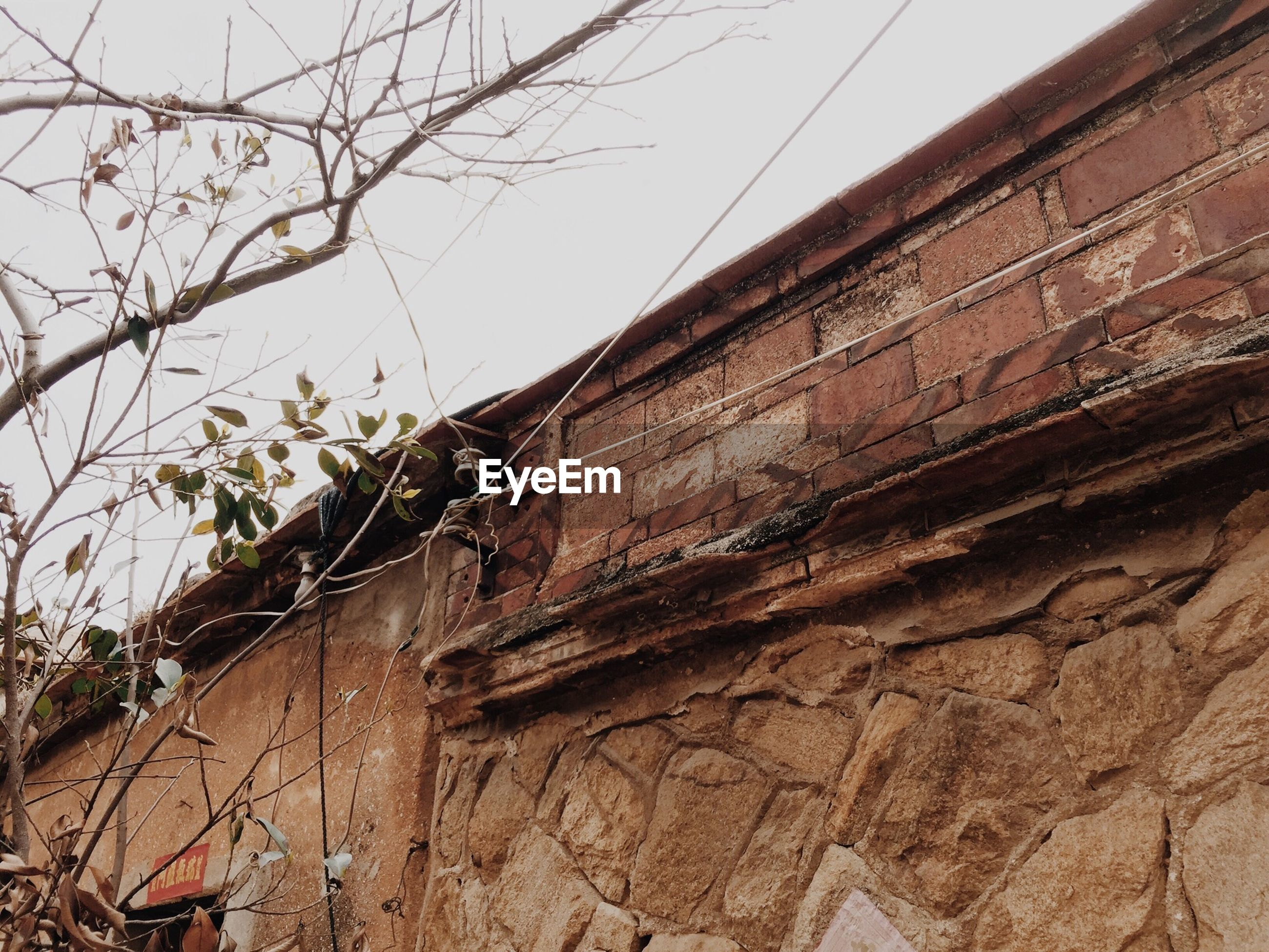 architecture, built structure, building exterior, low angle view, house, clear sky, residential structure, wall - building feature, tree, plant, growth, wall, sky, old, day, branch, outdoors, residential building, weathered, window