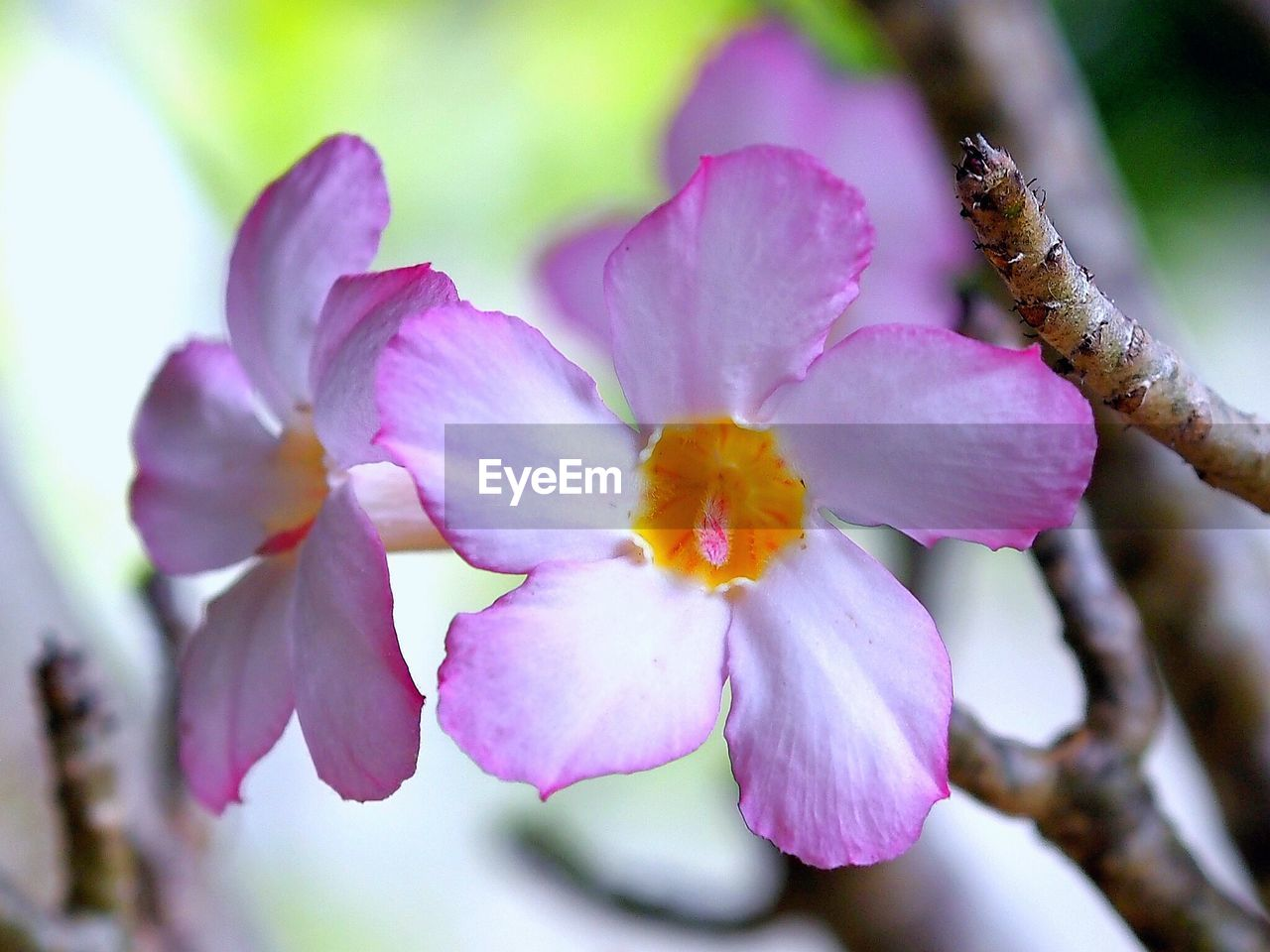 flower, fragility, beauty in nature, nature, petal, growth, blossom, freshness, flower head, botany, close-up, springtime, selective focus, day, branch, no people, stamen, plant, outdoors, tree