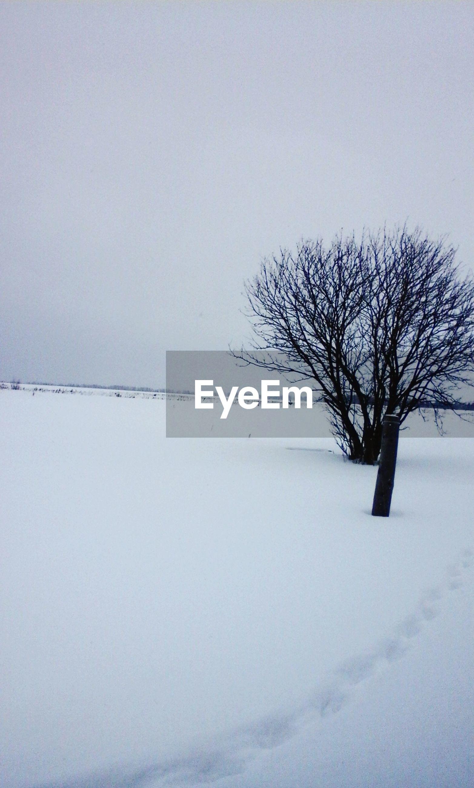 winter, bare tree, snow, cold temperature, tranquility, tranquil scene, tree, clear sky, weather, scenics, landscape, beauty in nature, nature, season, copy space, branch, covering, sky, non-urban scene, field