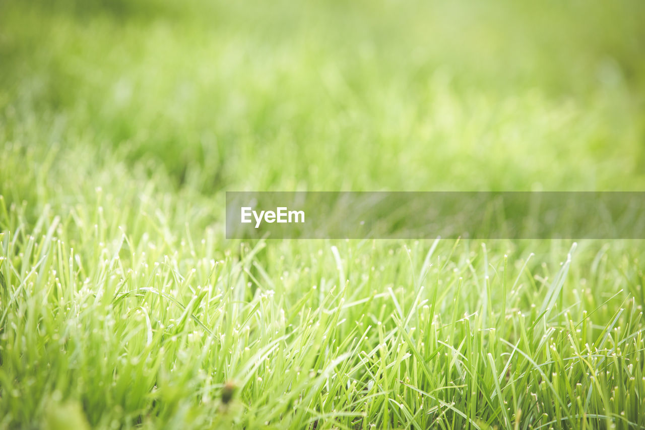 plant, grass, green color, selective focus, nature, field, growth, close-up, land, beauty in nature, no people, backgrounds, full frame, outdoors, freshness, tranquility, day, environment, fragility, blade of grass