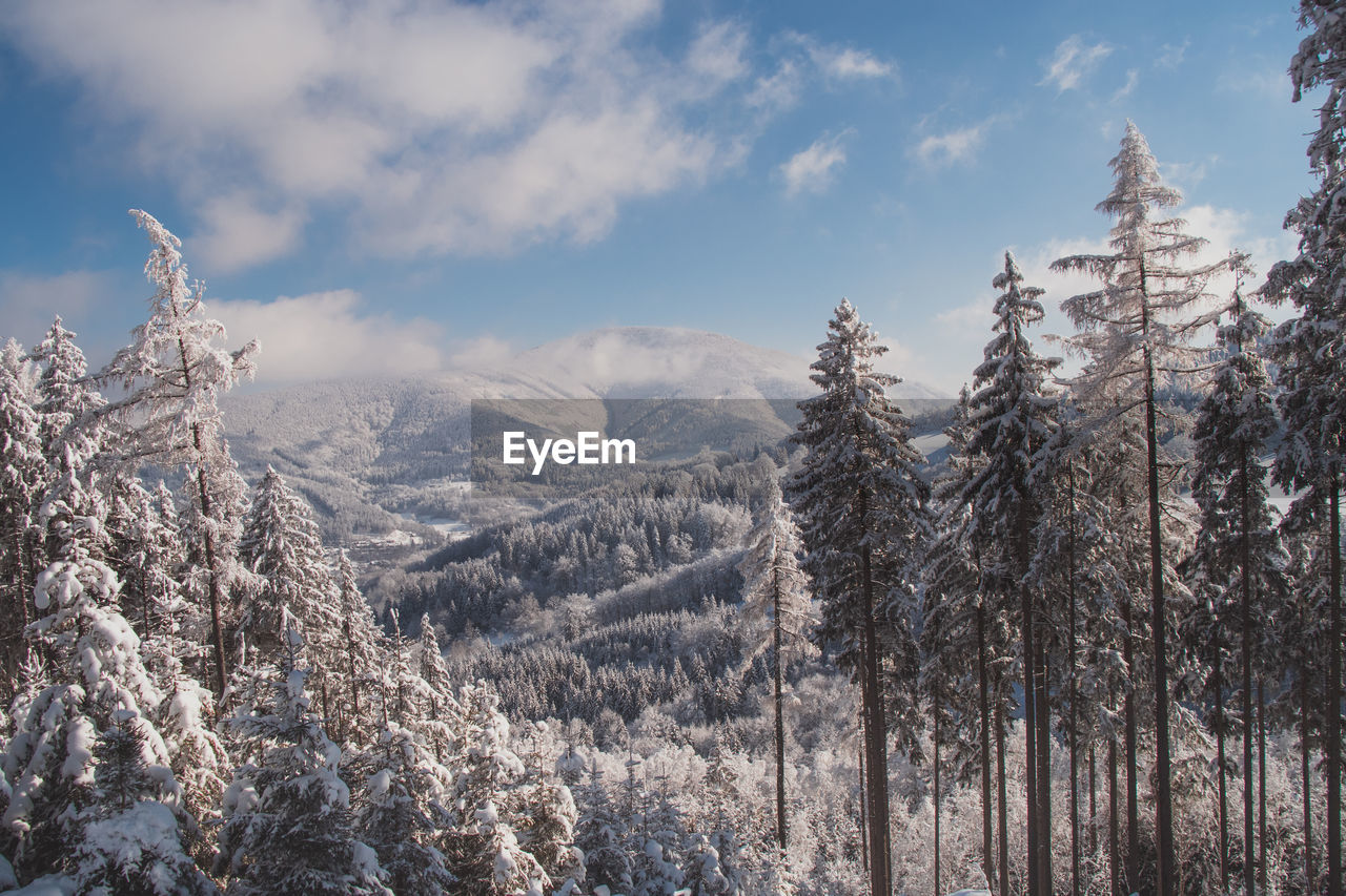 European wildlife shows its beauty created by mother nature. winter landscape