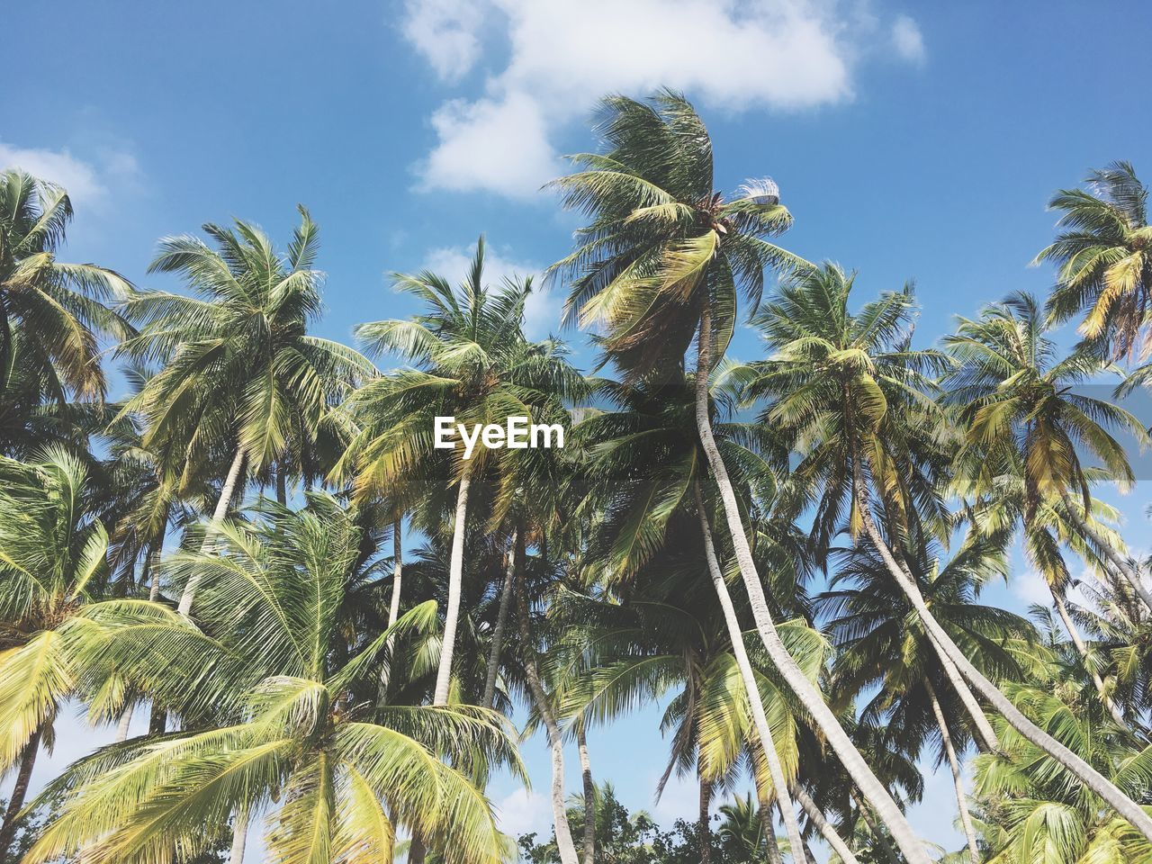 palm tree, tree, growth, nature, day, sky, low angle view, green color, no people, outdoors, beauty in nature