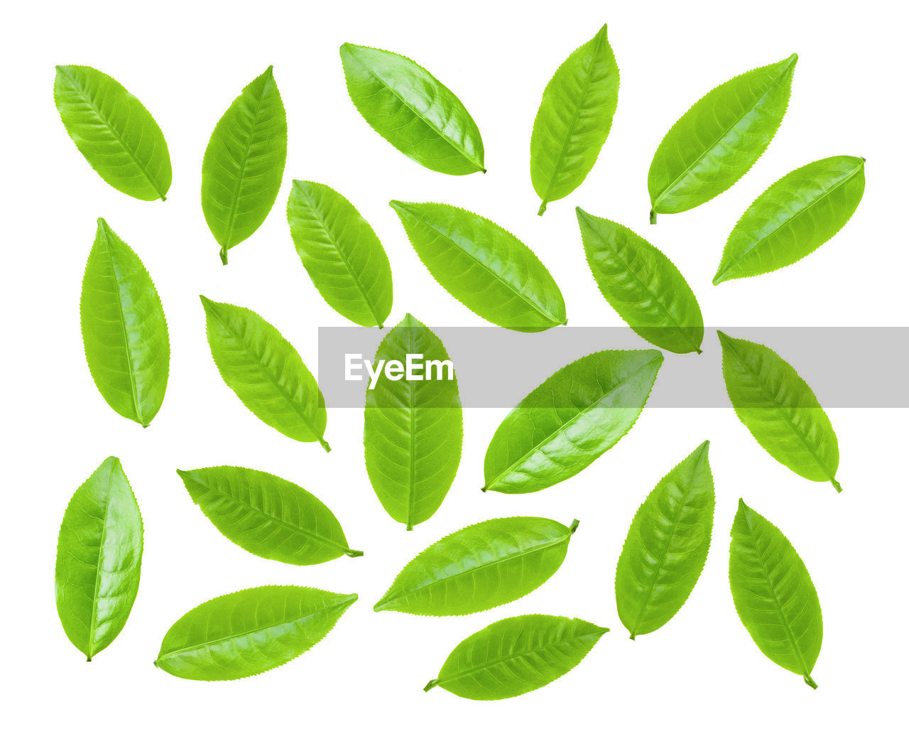 leaf, plant part, white background, green color, studio shot, no people, indoors, leaves, nature, directly above, food and drink, close-up, plant, food, cut out, mint leaf - culinary, pattern, herb, creativity, freshness, digital composite
