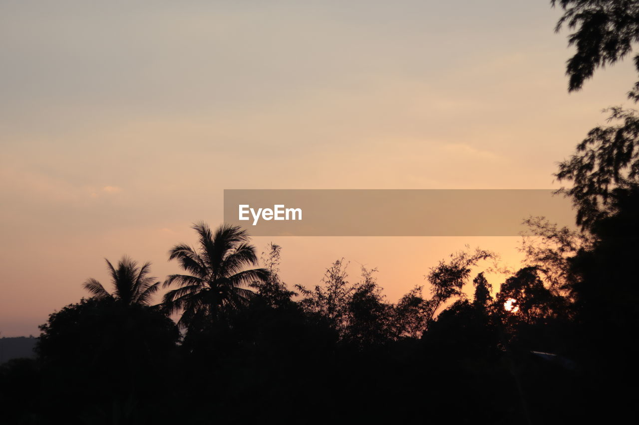 tree, sunset, sky, silhouette, plant, tranquility, beauty in nature, scenics - nature, tranquil scene, growth, nature, no people, palm tree, orange color, outdoors, idyllic, tropical climate, cloud - sky, non-urban scene, low angle view