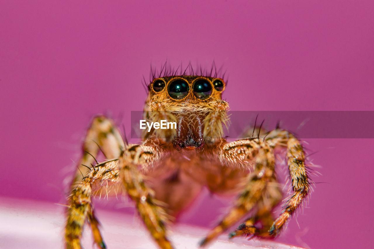 Macro Shot Of Spider