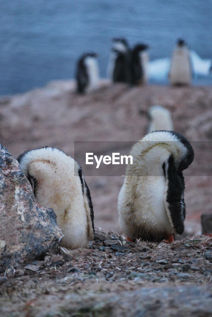 Magic nature in antarctic