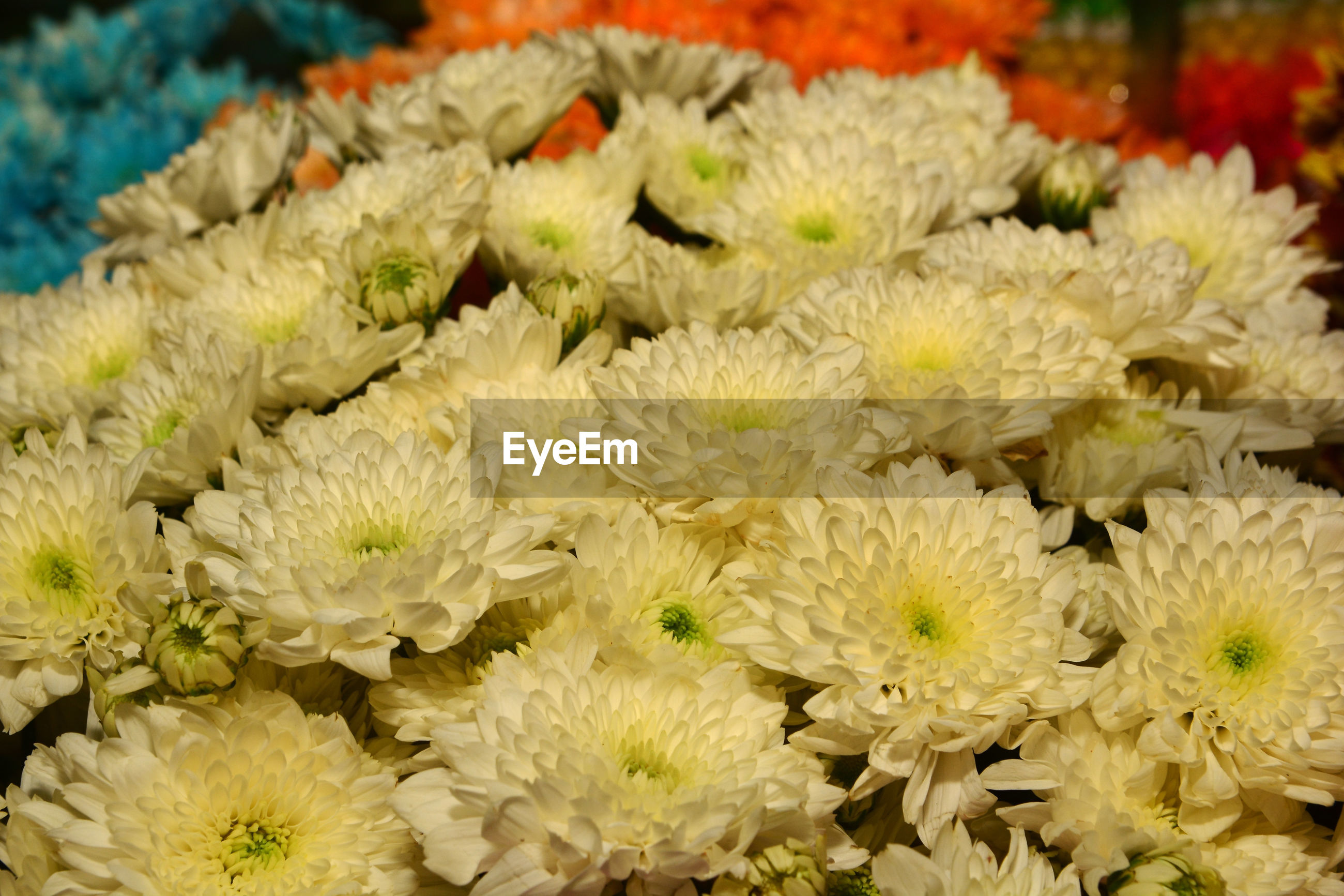 CLOSE-UP OF YELLOW FLOWERING PLANTS FOR SALE