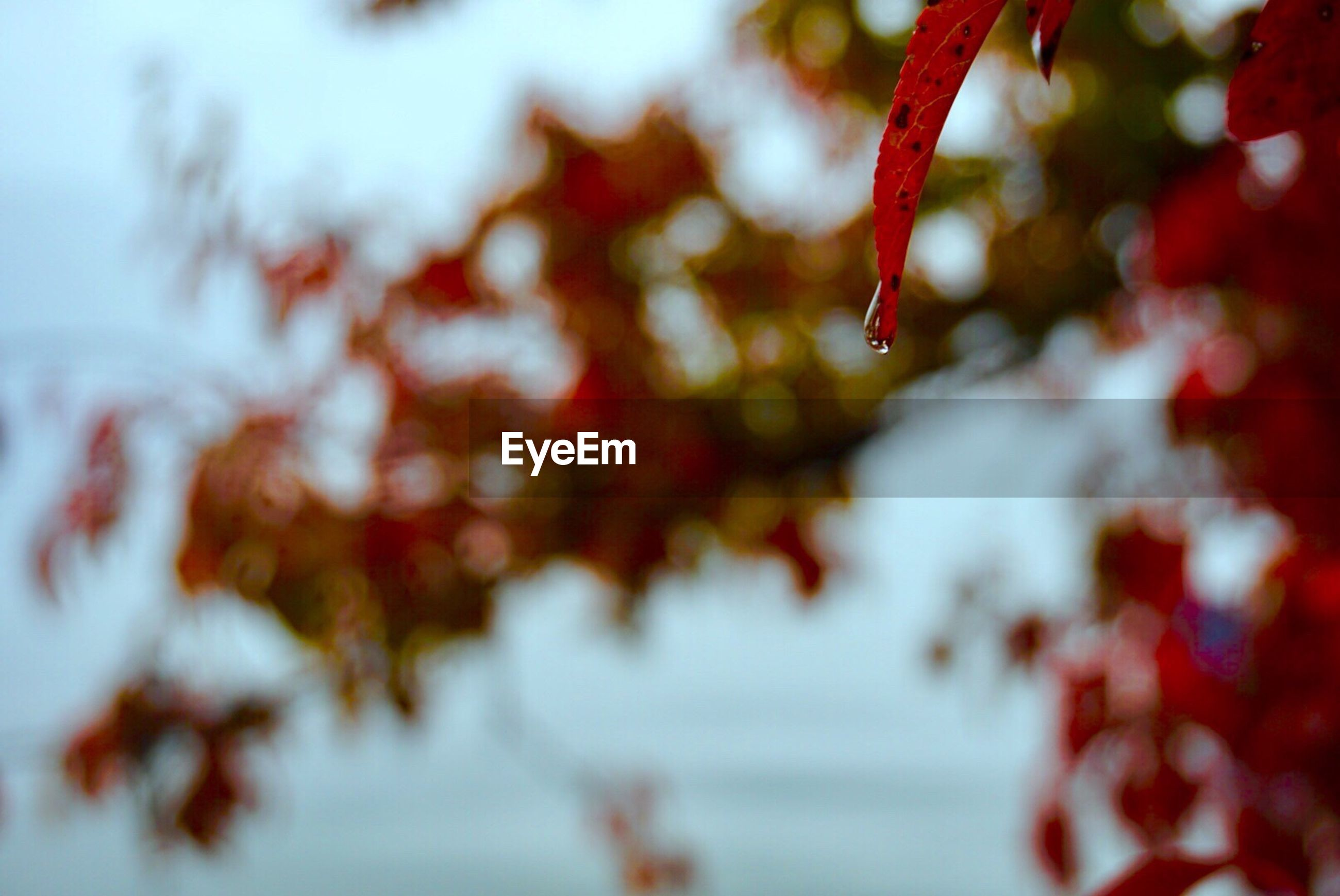 nature, close-up, red, no people, growth, outdoors, day, beauty in nature, branch, tree, fragility, backgrounds, freshness