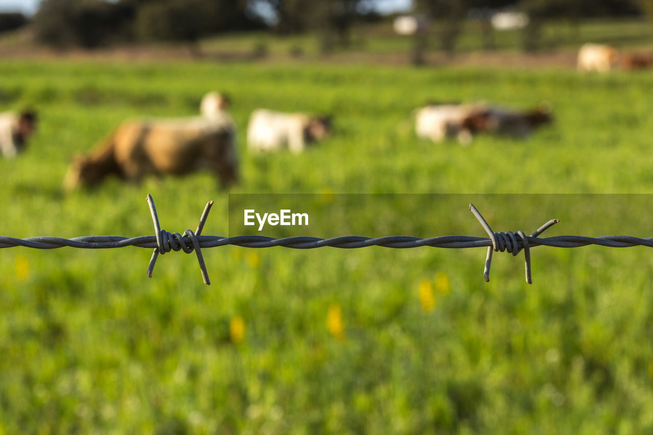 Close-up of barbed wire fence