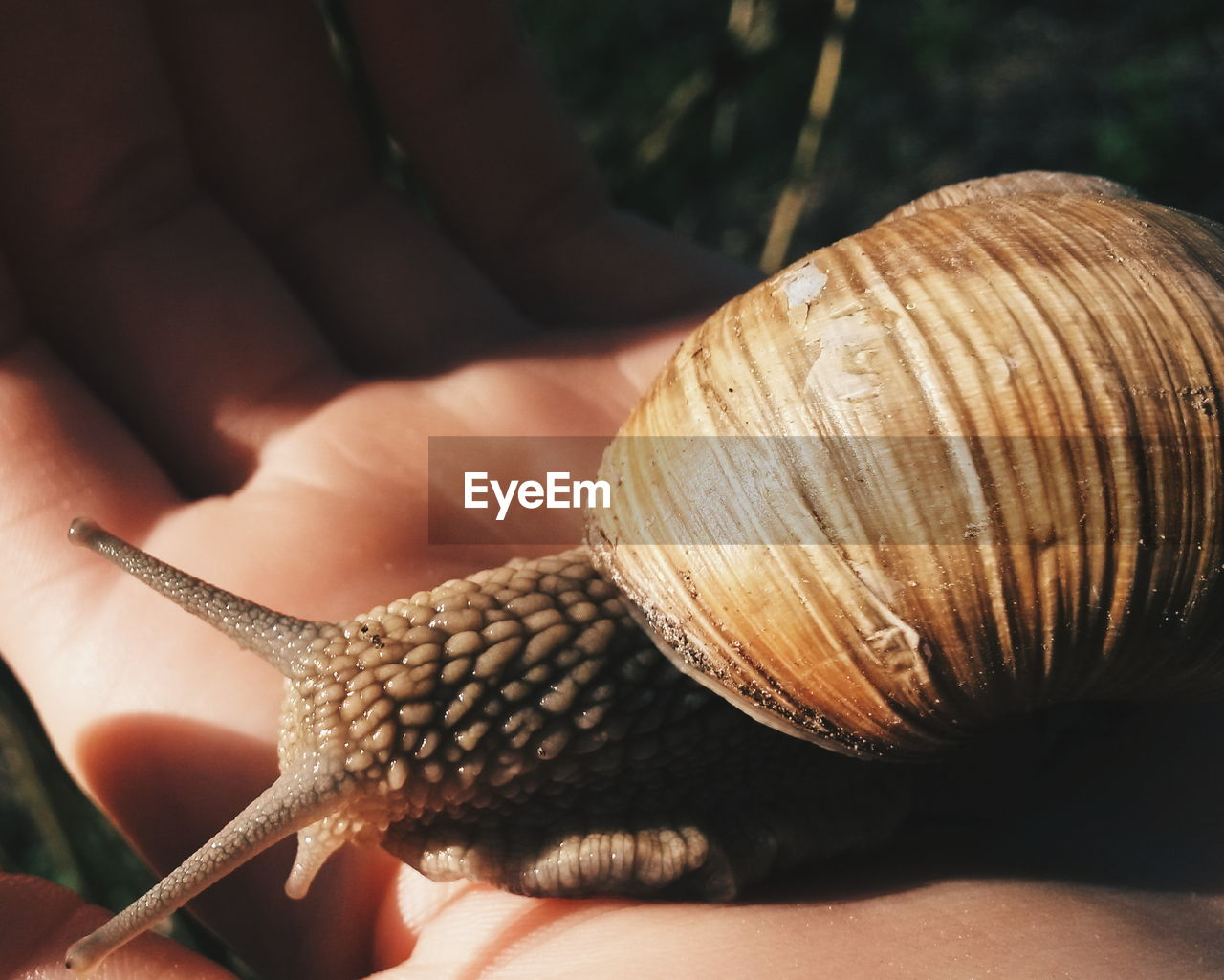 Close-Up Of Cropped Hand Holding Snail