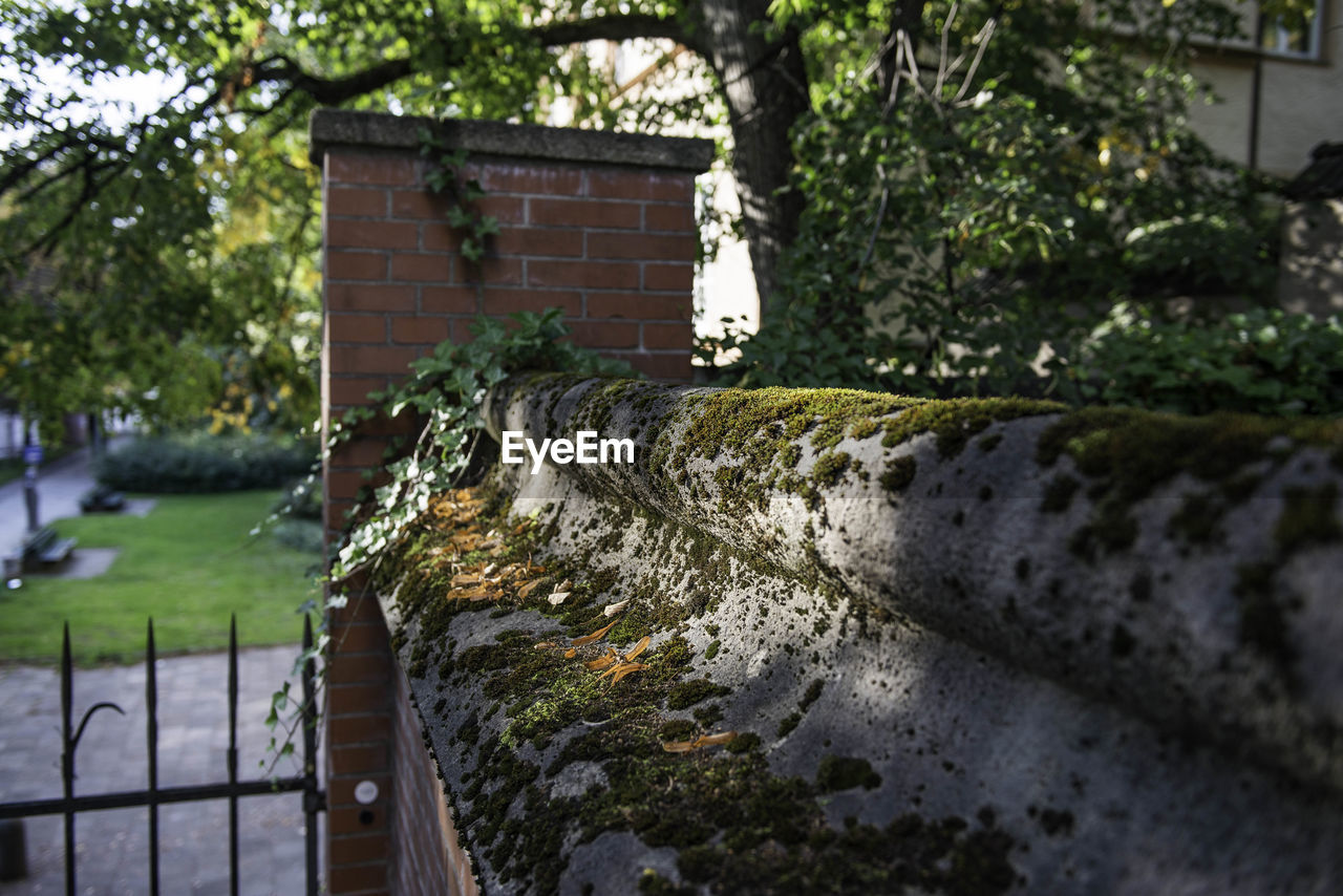 built structure, architecture, water, building exterior, nature, plant, day, no people, wall, focus on foreground, outdoors, tree, building, metal, wall - building feature, moss, motion, close-up, growth, canal