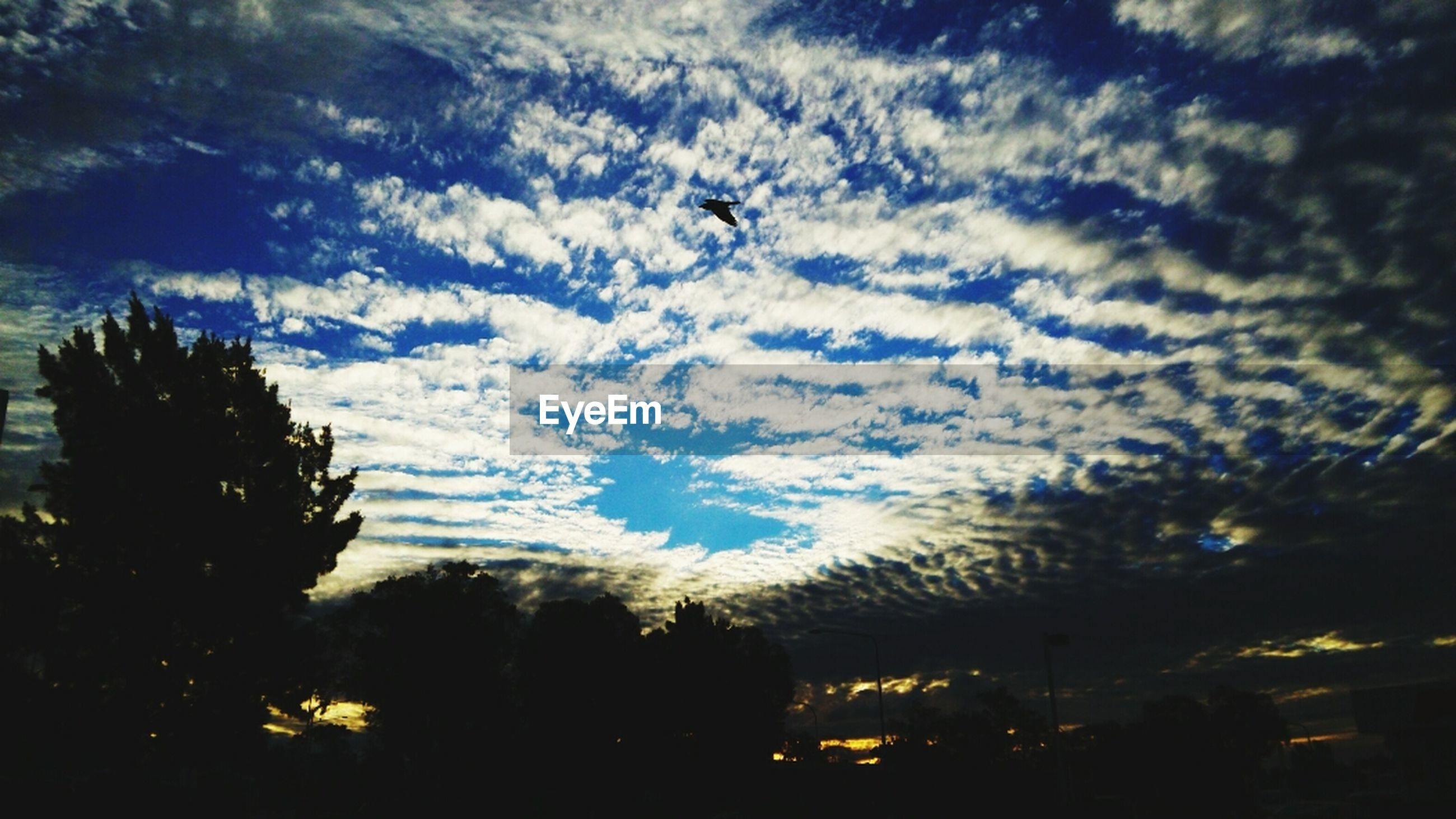 silhouette, sky, tree, cloud - sky, low angle view, cloudy, dusk, beauty in nature, nature, tranquility, scenics, cloud, sunset, tranquil scene, growth, weather, outdoors, dramatic sky, no people, overcast