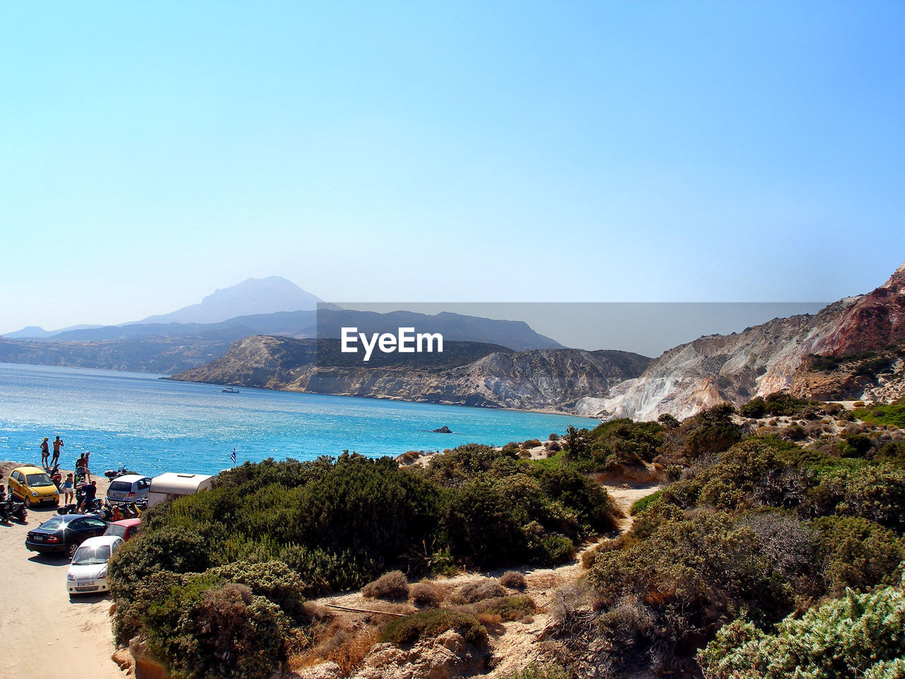 Trees Growing By Sea At Milos