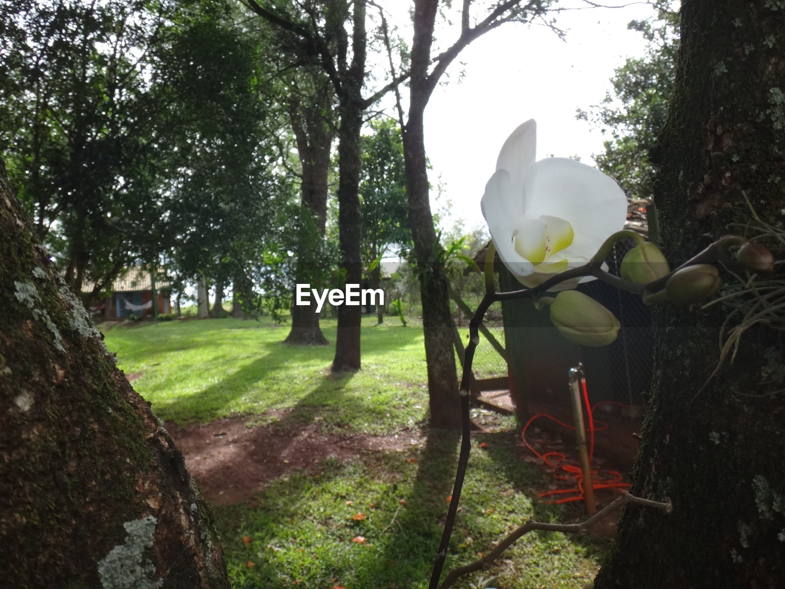 Close-up of fresh white orchid in back yard