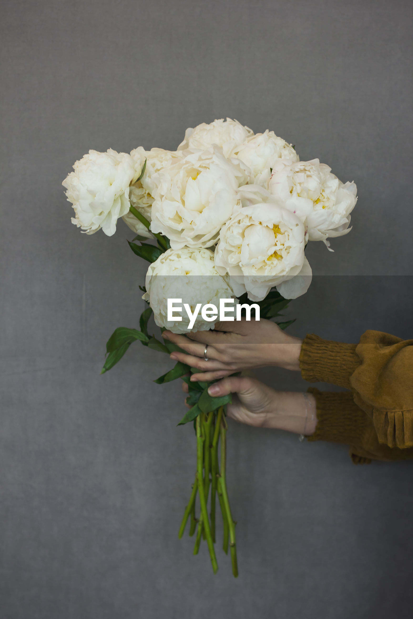 Close-up of woman hands holding white flowers against wall