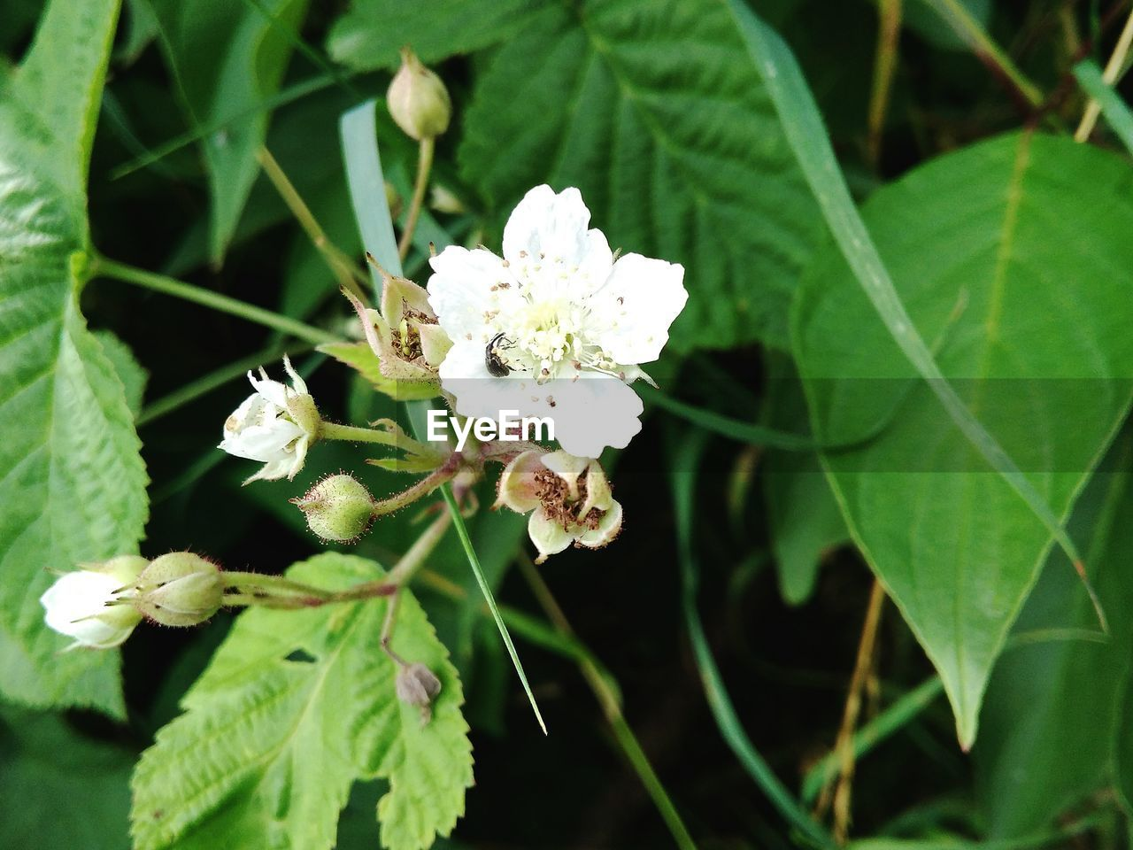 flower, growth, white color, fragility, nature, beauty in nature, freshness, leaf, petal, no people, day, green color, plant, outdoors, flower head, close-up, blooming