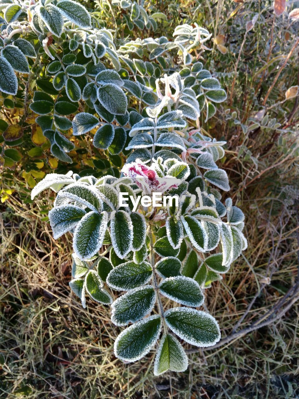 plant, growth, no people, nature, day, beauty in nature, green color, high angle view, succulent plant, close-up, cactus, land, field, outdoors, flower, focus on foreground, tranquility, leaf, plant part, flowering plant
