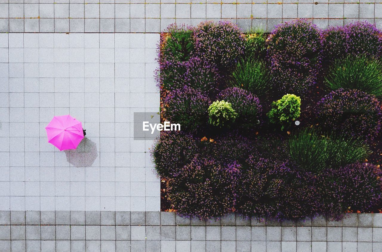 Directly Above Shot Of Person Holding Pink Umbrella While Walking By Plants