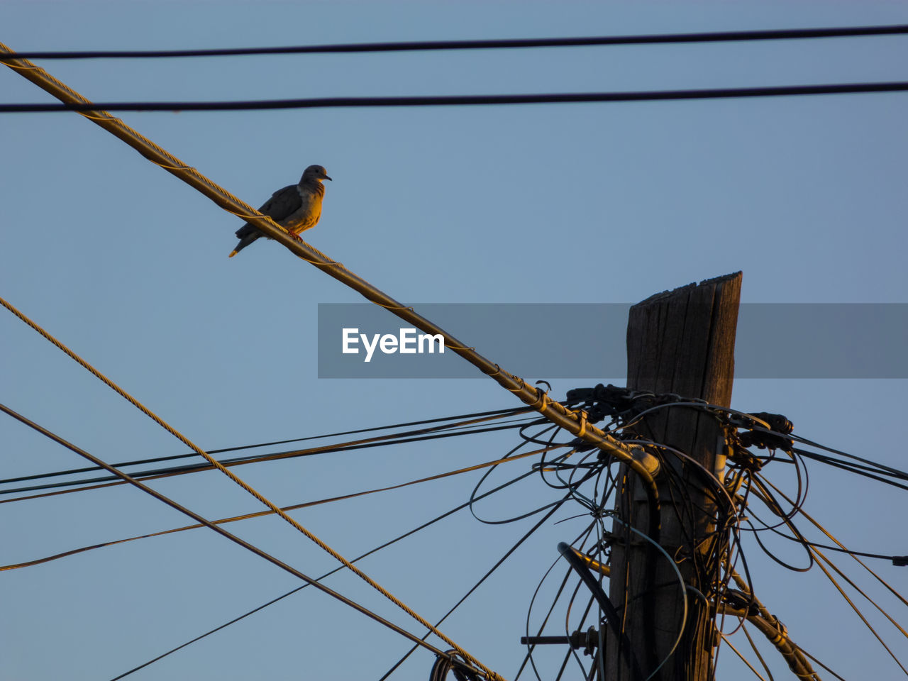 cable, low angle view, vertebrate, power line, bird, electricity, sky, animal wildlife, animal themes, animal, connection, animals in the wild, power supply, technology, clear sky, perching, no people, electricity pylon, nature, fuel and power generation, telephone line, outdoors, wooden post