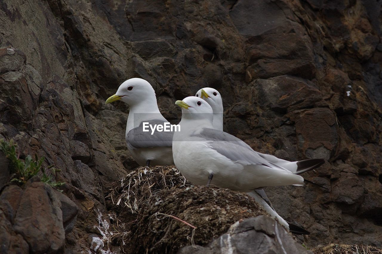 VIEW OF SEAGULLS PERCHING ON ROCK