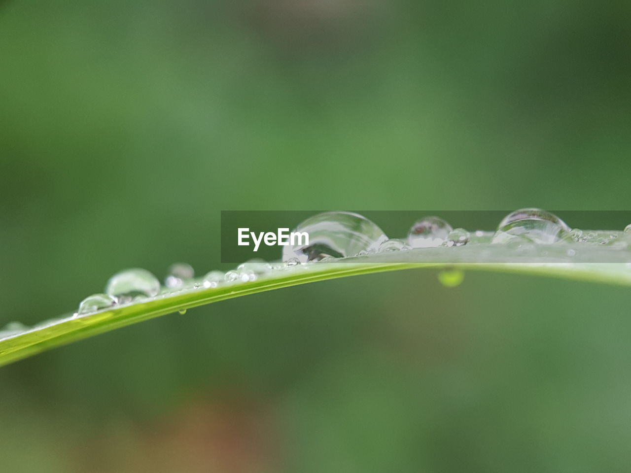 plant, water, selective focus, drop, growth, beauty in nature, green color, freshness, close-up, wet, vulnerability, nature, fragility, no people, plant part, purity, leaf, day, outdoors, dew, blade of grass, raindrop