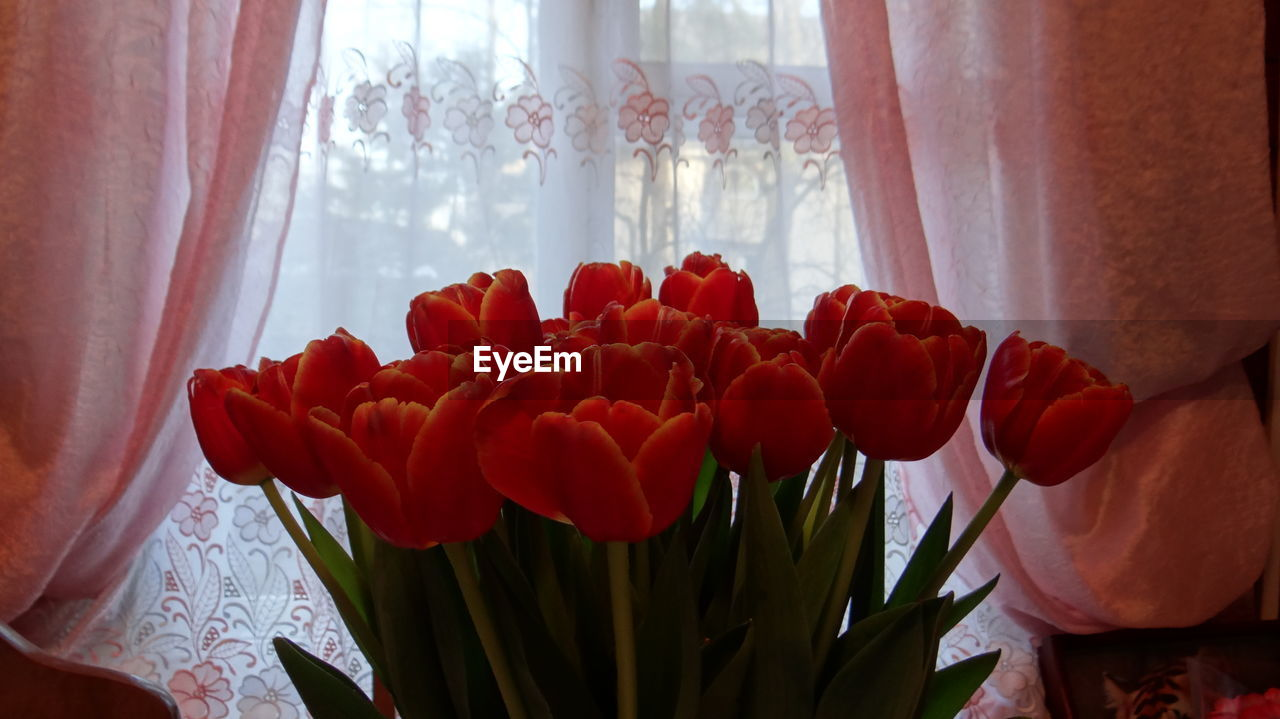 Close-Up Of Orange Tulips Against Window At Home