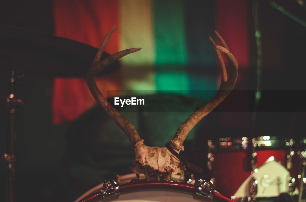 Antler horned on musical drum kit