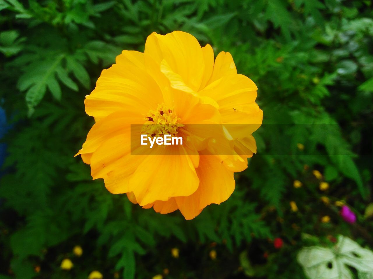 flower, yellow, petal, nature, beauty in nature, fragility, focus on foreground, flower head, freshness, growth, no people, plant, blooming, close-up, outdoors, day