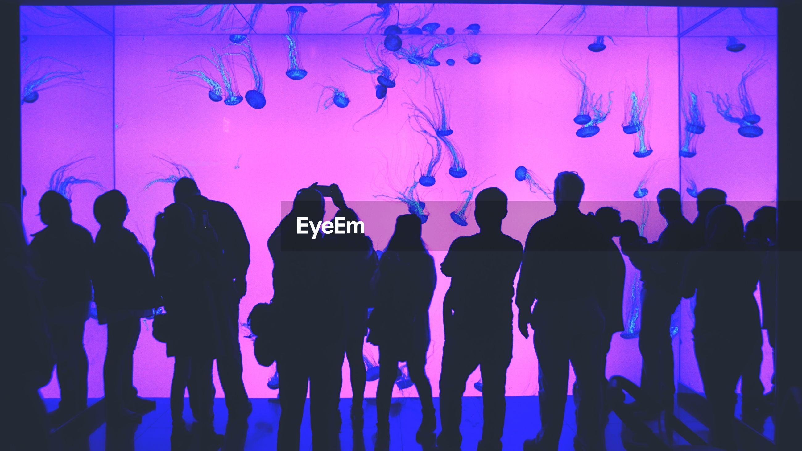 Silhouette people visiting aquarium