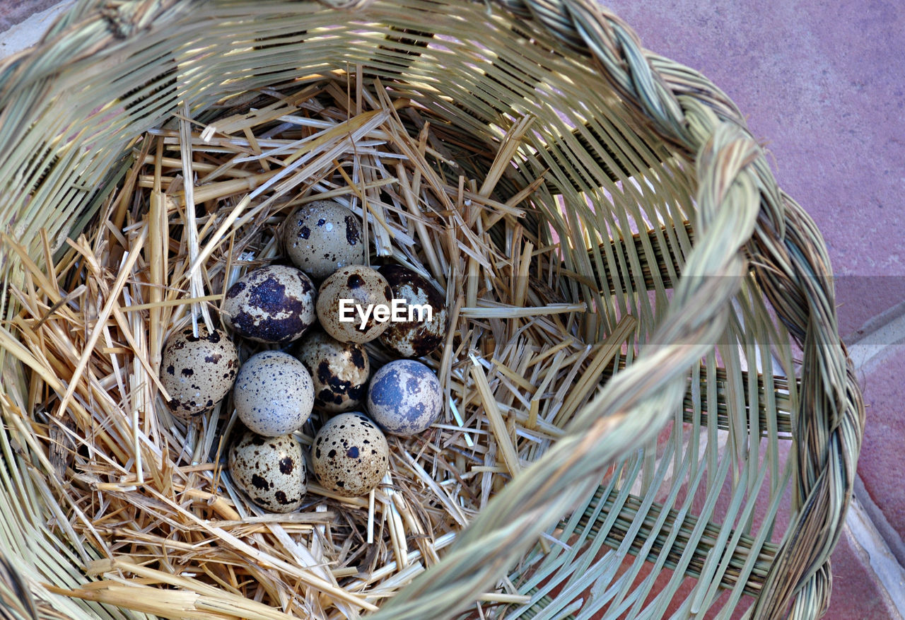 food and drink, basket, high angle view, no people, new life, fragility, bird nest, food, close-up, animal themes, day, nature, freshness, outdoors, healthy eating