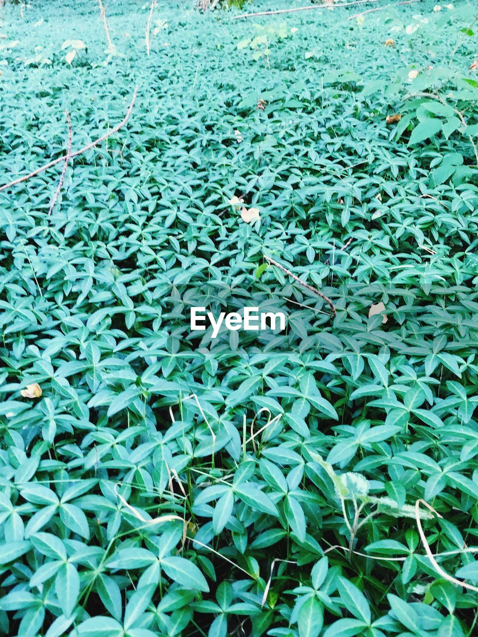 plant, green color, growth, nature, plant part, leaf, high angle view, day, full frame, backgrounds, no people, beauty in nature, land, water, tranquility, field, freshness, abundance, outdoors, leaves