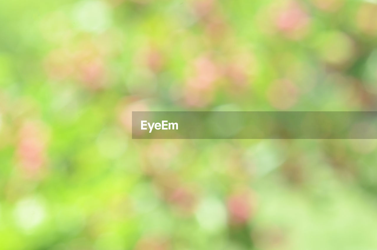 full frame, defocused, backgrounds, no people, day, beauty in nature, nature, outdoors, growth, plant, tranquility, close-up, green color, selective focus, abstract, blurred motion, focus on foreground, tree, freshness, sunlight