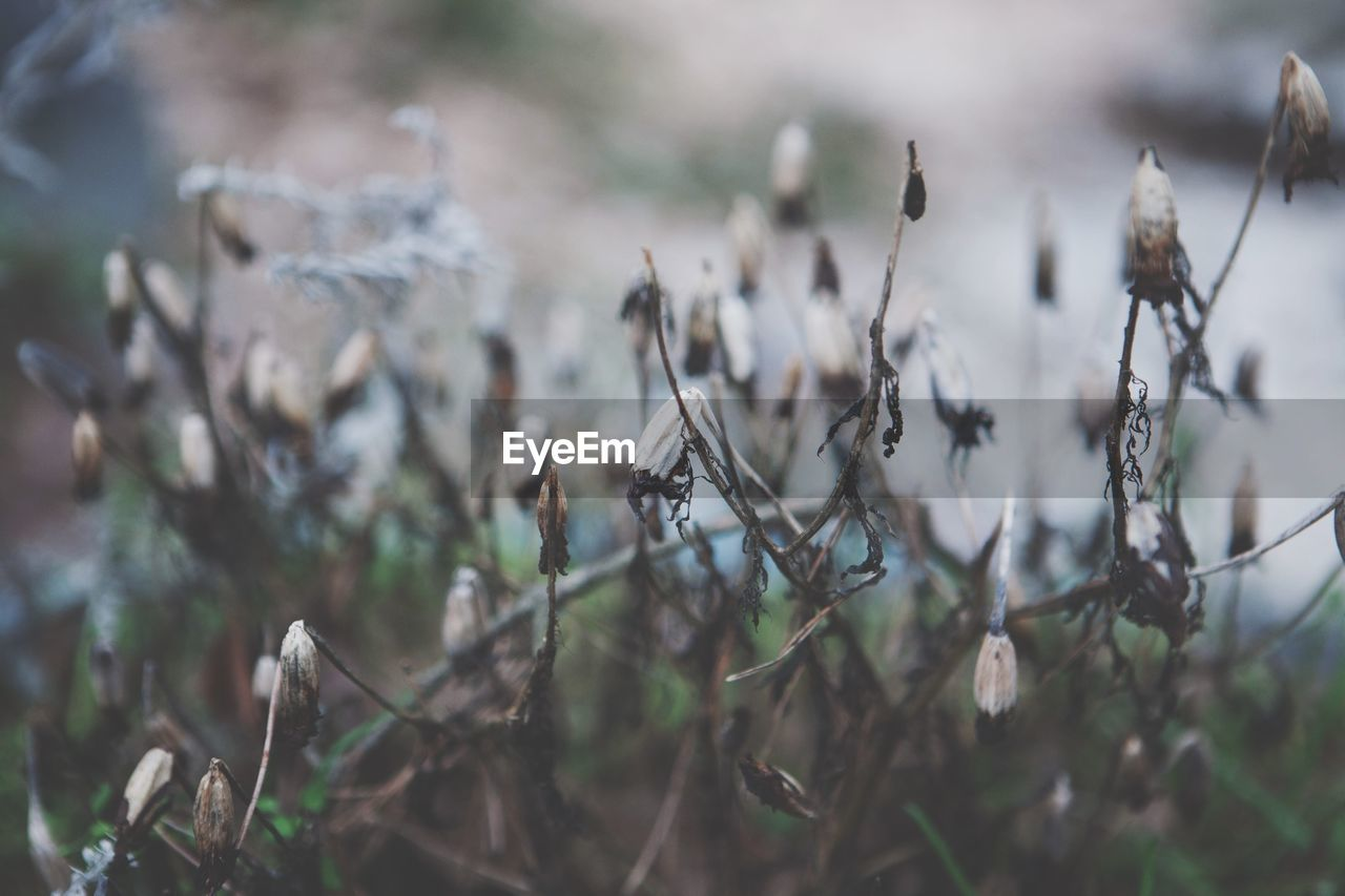 plant, growth, nature, selective focus, day, no people, focus on foreground, outdoors, close-up, land, beauty in nature, dry, tranquility, field, flower, plant stem, twig, vulnerability, dried plant, tree