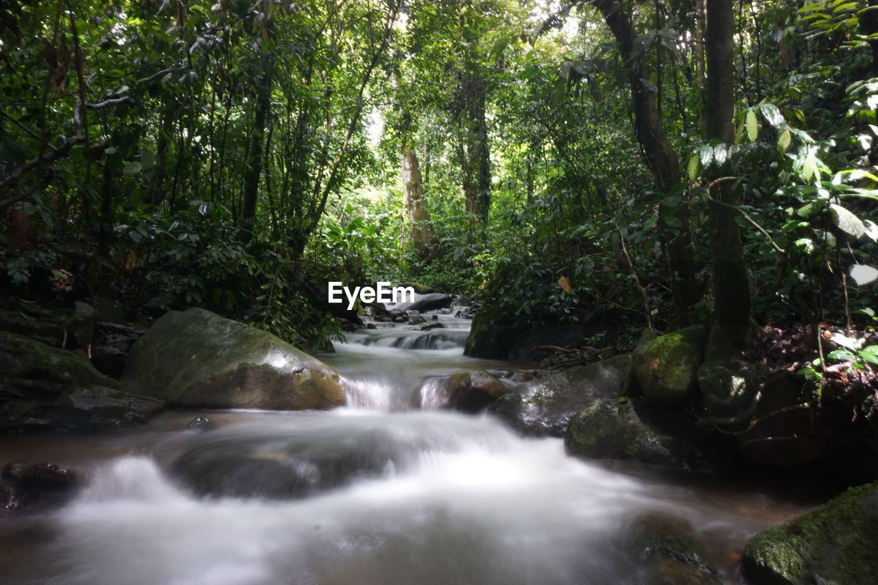 tree, forest, plant, water, beauty in nature, scenics - nature, waterfall, long exposure, nature, flowing water, motion, land, blurred motion, lush foliage, day, foliage, no people, flowing, growth, outdoors, woodland, rainforest