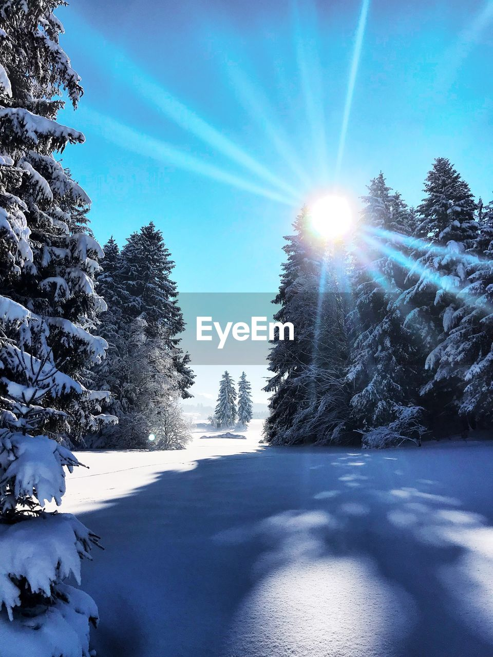 cold temperature, winter, snow, tree, plant, sky, sunlight, sunbeam, beauty in nature, nature, sun, scenics - nature, tranquility, lens flare, covering, tranquil scene, day, no people, sunny, bright, outdoors, snowcapped mountain, powder snow