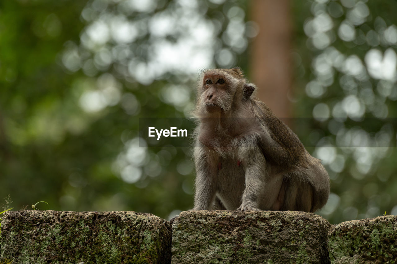 primate, mammal, animals in the wild, one animal, animal wildlife, vertebrate, focus on foreground, sitting, day, no people, wall, solid, looking, looking away, rock, nature, outdoors