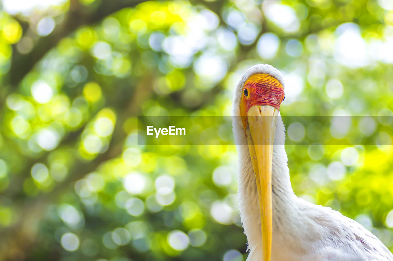 one animal, bird, animal themes, beak, animals in the wild, animal wildlife, focus on foreground, no people, nature, close-up, day, outdoors, portrait