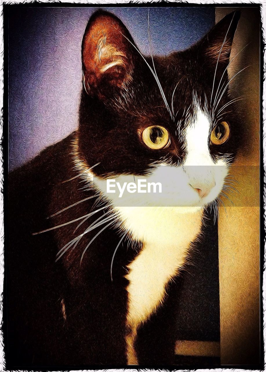 pets, one animal, domestic cat, domestic animals, animal themes, mammal, cat, feline, indoors, whisker, looking at camera, no people, portrait, sitting, close-up, day