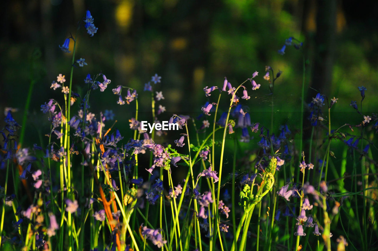 flower, growth, nature, plant, beauty in nature, fragility, no people, outdoors, blooming, freshness, day, grass, flower head, close-up