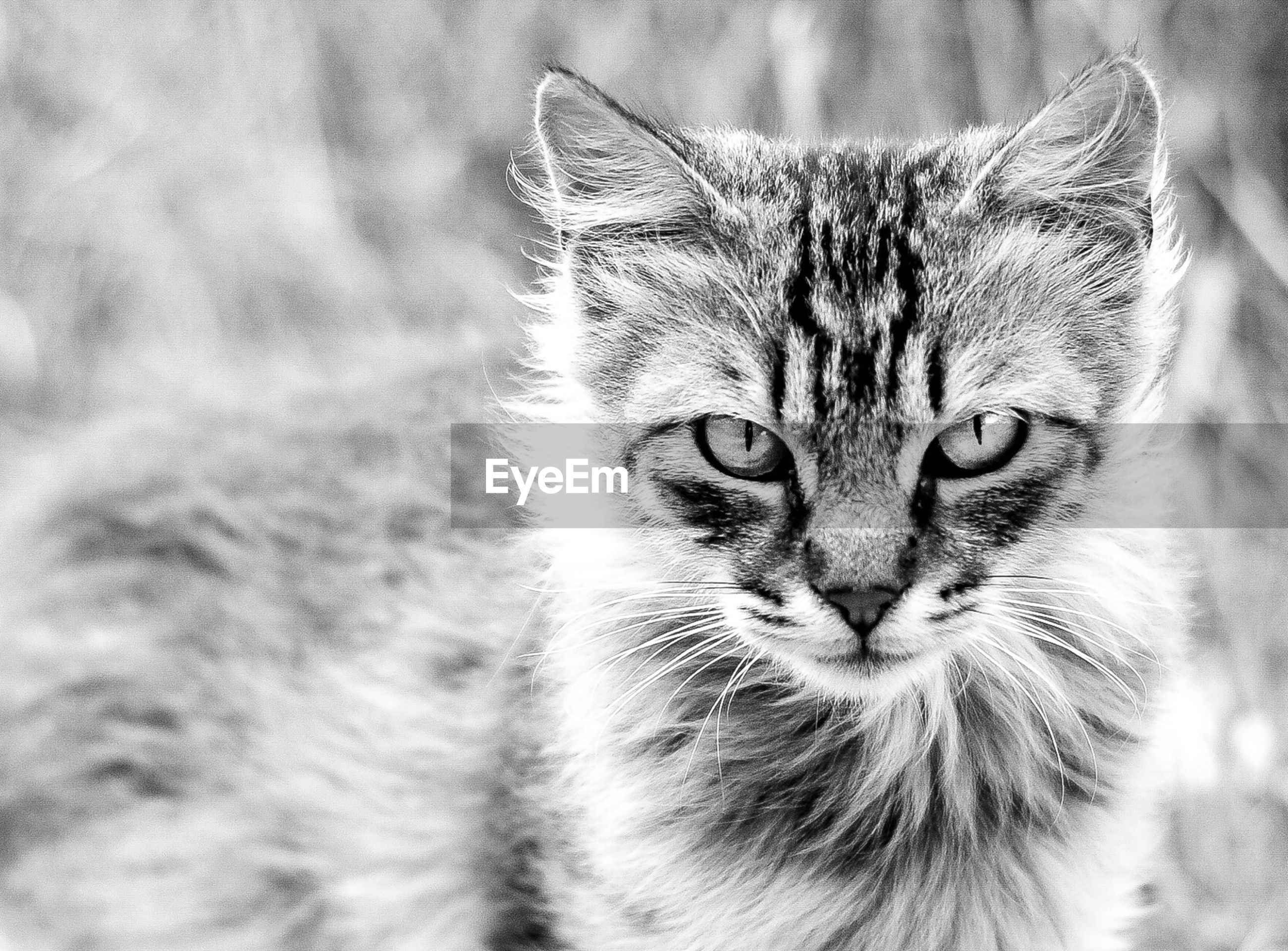 animal themes, one animal, domestic cat, mammal, pets, domestic animals, cat, whisker, feline, animal head, close-up, portrait, looking at camera, animal eye, focus on foreground, animal body part, alertness, animal hair, front view
